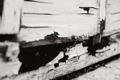 Madeira preto e branco Imagens de Stock