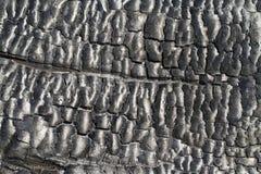 Madeira queimada Imagem de Stock