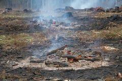 Madeira queimada na estaca fotos de stock royalty free