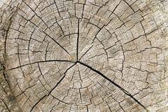 Madeira rachada anéis de árvore textured envelhecidos ásperos Corte a fatia do log da árvore que mostra a idade e os anos imagens de stock