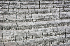 Madeira rachada envelhecida 1 Fotos de Stock Royalty Free