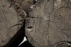 Madeira rachada próxima da textura do coto da grão Fotografia de Stock