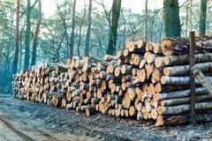 A madeira registra o fundo Imagem de Stock Royalty Free