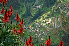 Madeira's flowers with road at bottom of clif Royalty Free Stock Photos