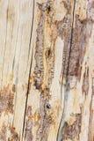 Madeira seca Fotos de Stock Royalty Free