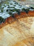 Madeira serrada da árvore de carvalho Fotografia de Stock