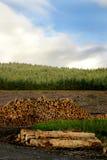 Madeira serrada de registo da árvore Fotos de Stock