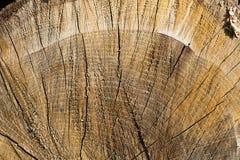 Madeira serrada desbastada no sol com superfície sombrio áspera Imagens de Stock Royalty Free