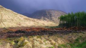 Madeira serrada molhada nas montanhas Foto de Stock Royalty Free