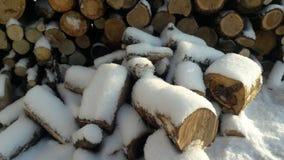 Madeira serrada sob a neve Imagens de Stock