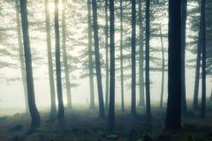 Madeira solitária Reino Unido do homem Fotografia de Stock Royalty Free