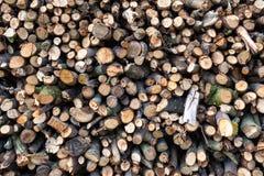 Madeira Spruce no fundo Pilha da lenha imagens de stock