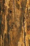 A madeira suja adverte dentro cores Imagens de Stock