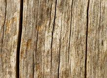 Madeira taxture2 Fotos de Stock