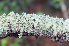 Madeira textured com musgo verde Imagem de Stock