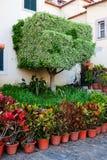 Madeira Town Garden. Beautiful small town garden on the island of Madeira. Camara de Lobos Stock Photo