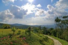 Madeira tropical imagem de stock royalty free