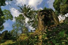 Madeira tropical imagens de stock