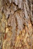A madeira velha Fotos de Stock