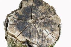 Madeira velha do coto Foto de Stock