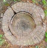 Madeira velha dos anéis de árvore Foto de Stock