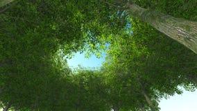 madeira verde da natureza Tronco e coma Foto de Stock