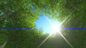 madeira verde da natureza Tronco e coma Fotografia de Stock Royalty Free