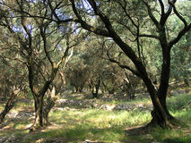 Madeira verde-oliva Foto de Stock