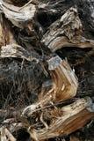 Madeira Waste Fotografia de Stock Royalty Free