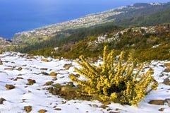 Madeiran海滨胜地和海洋鸟瞰图  免版税库存照片