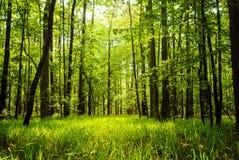madeiras Foto de Stock