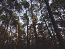 madeiras Imagem de Stock Royalty Free