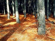 madeiras Fotografia de Stock Royalty Free