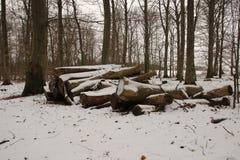 Madeiras brancas nevado da pilha da lenha em fevereiro fotografia de stock royalty free