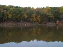 Madeiras coloridas refletidas no lago Fotografia de Stock Royalty Free