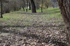Madeiras com folhas foto de stock