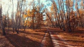 madeiras da árvore de floresta da calha do voo Alargamento de Sun Fundo da natureza video estoque