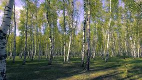 madeiras da árvore de floresta da calha do voo Alargamento de Sun Fundo da natureza vídeos de arquivo