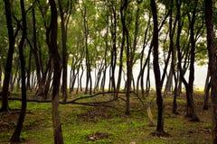 Madeiras da selva das ?rvores na manh? foto de stock royalty free