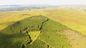Madeiras de Capanagh Moss Bog Forest na Irlanda video estoque