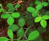 Madeiras de O das folhas Imagem de Stock Royalty Free