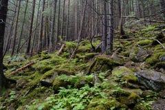 Madeiras de Tatra fotos de stock royalty free