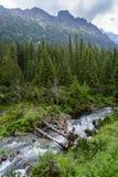 Madeiras de Tatra Fotos de Stock