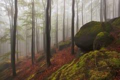 Madeiras de vista assustadores do conto de fadas nevoento bonito da floresta em um dia enevoado Manhã nevoenta fria na floresta d fotos de stock royalty free