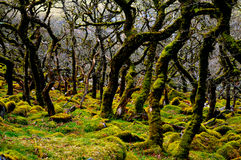 Madeiras de Wylde Fotografia de Stock