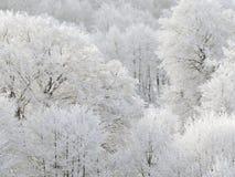 Madeiras do inverno Foto de Stock