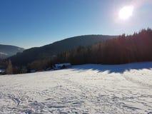 Madeiras do inverno Imagem de Stock