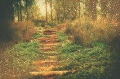 Madeiras do mistério sonhador e luzes feericamente borradas sumário do bokeh do brilho imagem filtrada e textured Imagem de Stock Royalty Free