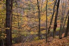 Madeiras do outono fotos de stock