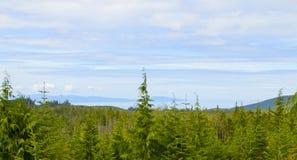 Madeiras e céu do panorama Imagem de Stock Royalty Free